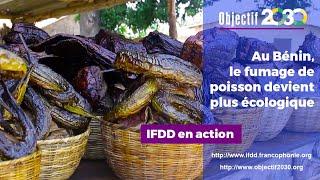 Download Au Benin, le fumage de poissons devient plus écologique Video