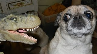 Download Dogs just never fail to make us laugh - Funny dog compilation Video