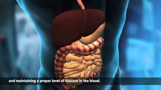 Download Internal Organs | Human Body | Science Video Lecture Video