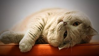 Download Funny Cats Not In Mood 🤭🐱 Cute Cats Without Mood (Full) [Funny Pets] Video