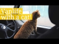 Download Travelling with a cat! Video