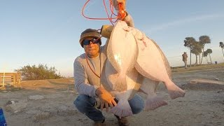 Download Galveston Flounder fishing (December 15th limit) 1080p HD Video