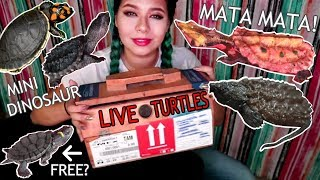 Download UNBOXING 5 NEW RARE EXPENSIVE EXOTIC TURTLES (SOME ENDANGERED SPECIES!) Video
