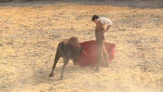 Download Vuelven las corridas de toros a Bogotá Video