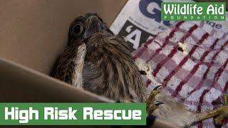 Download Dangerous Treetop Rescue Video