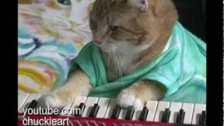 Download Keyboard Cat! - ″Bento's Groove″ Video