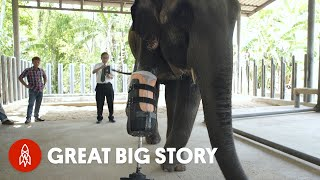 Download One Step at a Time: The First Elephant Prosthetics Video