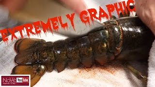 Download EXTREMELY GRAPHIC: Maine Lobster Dynamite - How To Make Sushi Series Video