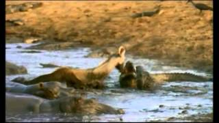 Download PARQUE NACIONAL DE SERENGETI Video