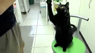 Download Black Cats are Pawsome! Video