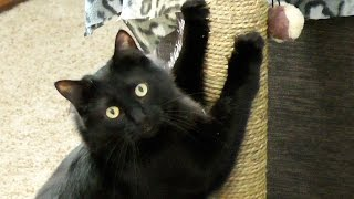 Download 9 Reasons Black Cat Owners are Lucky! Video