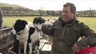 Download A Day with the Tweeting Shepherd @herdyshepherd1 Video