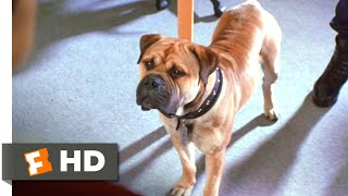 Download See Spot Run (2001) - We're a Team Scene (4/8) | Movieclips Video