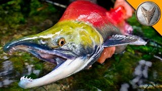 Download MONSTER Sockeye Catch! Video