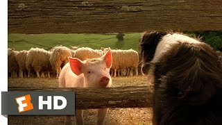 Download Babe, the New Sheepdog - Babe (4/9) Movie CLIP (1995) HD Video