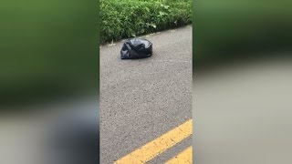 Download Watch Mom Bravely Rescue Puppy Trapped Inside Garbage Bag Left As Roadkill Video