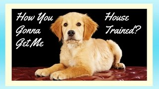 Download How To Potty Train A Golden Retriever Potty Training Golden Retriever Puppies Housebreaking Video