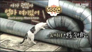 Download 연통 속에 머리를 넣고 매일 우는 고양이.. 들여다보니 그곳엔 ㅣ Kitten Fell 10 Meters Down.. What The Mama Cat Can Do Is..? Video