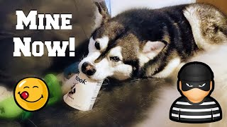 Download My Dog Steals Ice Cream | Try Not To Laugh Video