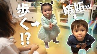 Download 【可愛すぎ注意】ルネちゃんついに歩く!?!?でもそれに嫉妬するルイwwwVlog Video
