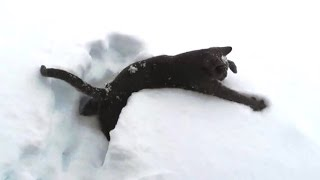 Download Kittens Discovering Snow For The First Time Compilation Video