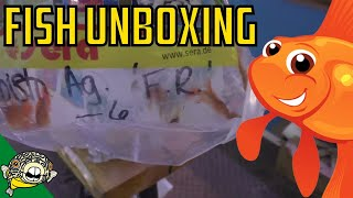 Download Fish Unboxing! Angelfish eat babies! Daily Dose #27 Video