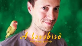 Download A lovebird will change your life Video