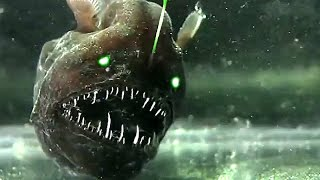 Download 5 Mysterious Deep Sea Creatures Caught on Tape Video