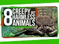 Download 8 Creepy Animals That Are Actually Harmless Video