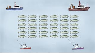 Download Fisheries Economics & Policy: Intro to Fisheries Management Video