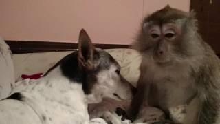 Download Monkey Kisses Video