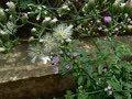 Download सहदेवी के पौधे की जड़ और बस.....तांत्रिक और आयुर्वेद उपाय Video