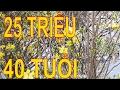 Download Đường hoa Cần Thơ cây mai giá 25 triệu - Nguyen Thai Hoa Video
