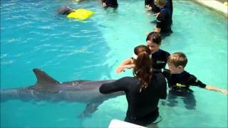 Download Children Swim with Dolphins Miami Video