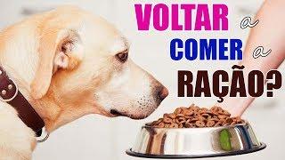 Download Como fazer meu cachorro voltar a comer a ração? Video