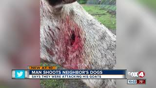 Download Neighbor shoots dogs to death to protect goats and kids Video