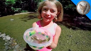 Download Exploring for Creek Creatures! Video