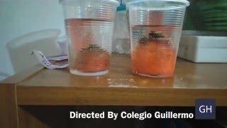 Download Experimento Observa Células en Acción Video