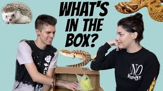 Download WHAT'S IN THE BOX CHALLENGE! | Feat. Taylor Nicole Dean + All of Her Animals Video