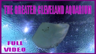 Download The Greater Cleveland Aquarium - FULL video - DRONE OHIO Video