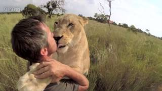 Download LION HUGGING & The Story of Vayetsi, Livy & Ginny | The Lion Whisperer Video