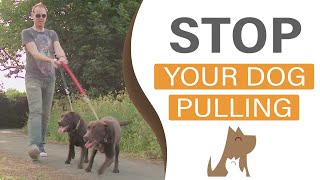 Download How to train your dog to walk to heel - The Dog Guardian Video