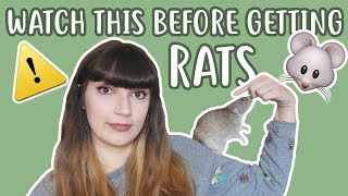 Download 💡🐀 20 THINGS YOU SHOULD KNOW BEFORE OWNING RATS 🐀💡 Video