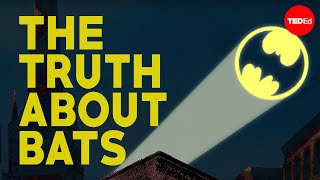 Download I'm Batman - Amy Wray Video