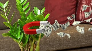 Download 10 комнатных растений, приносящих финансовую прибыль в дом! Video