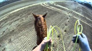 Download Team Roping Position 4: Handling steers that run Hard Video