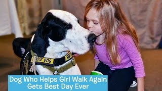 Download George the Great Dane Service Dog | DOG's BEST DAY Video