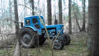 Download t-40 IN FOREST Video