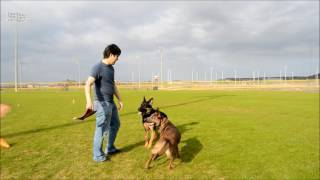 Download Two years in 5 minutes - raising a Belgian Malinois Video