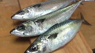 Download 鯖のさばき方~しめ鯖の作り方と握り 寿司屋の仕込み how to fillet a mackerel and make sushi and shimesaba Video
